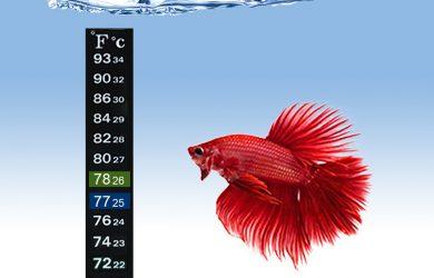 Aquarium Sticker Thermometer